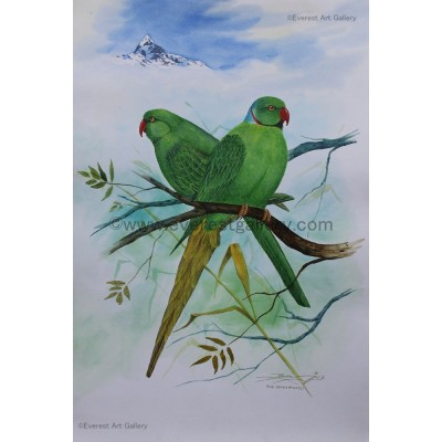 Rose-Ringeo Parakeet Bird